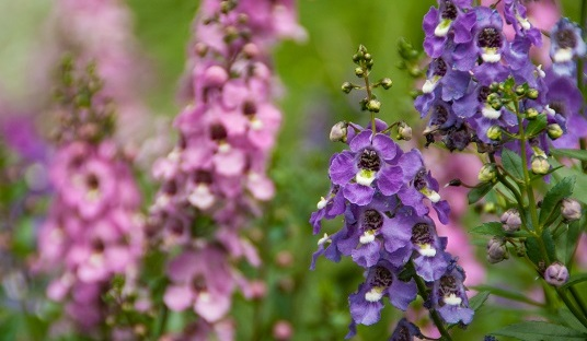 We often see pinks and purples in nature, but why is the color blue so rare?