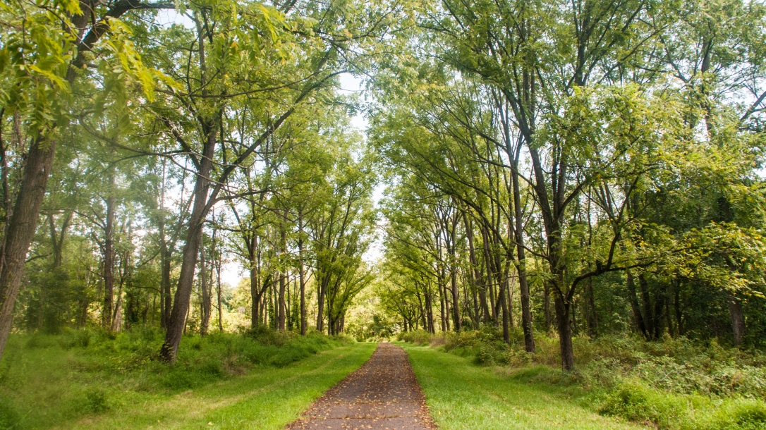tree lined path at tyler