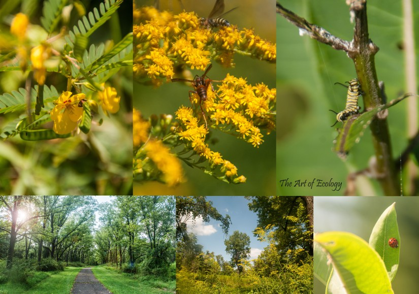 Summer 2017 Selection from Tyler State Park Pollinator Habitat Restoration Photography