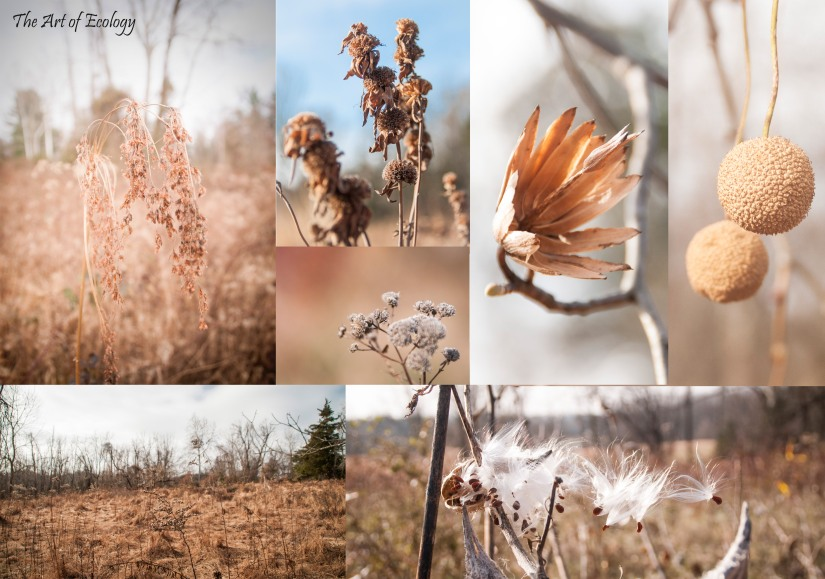 Fall 2018 Selections from Tyler State Park Pollinator Habitat Restoration Photography
