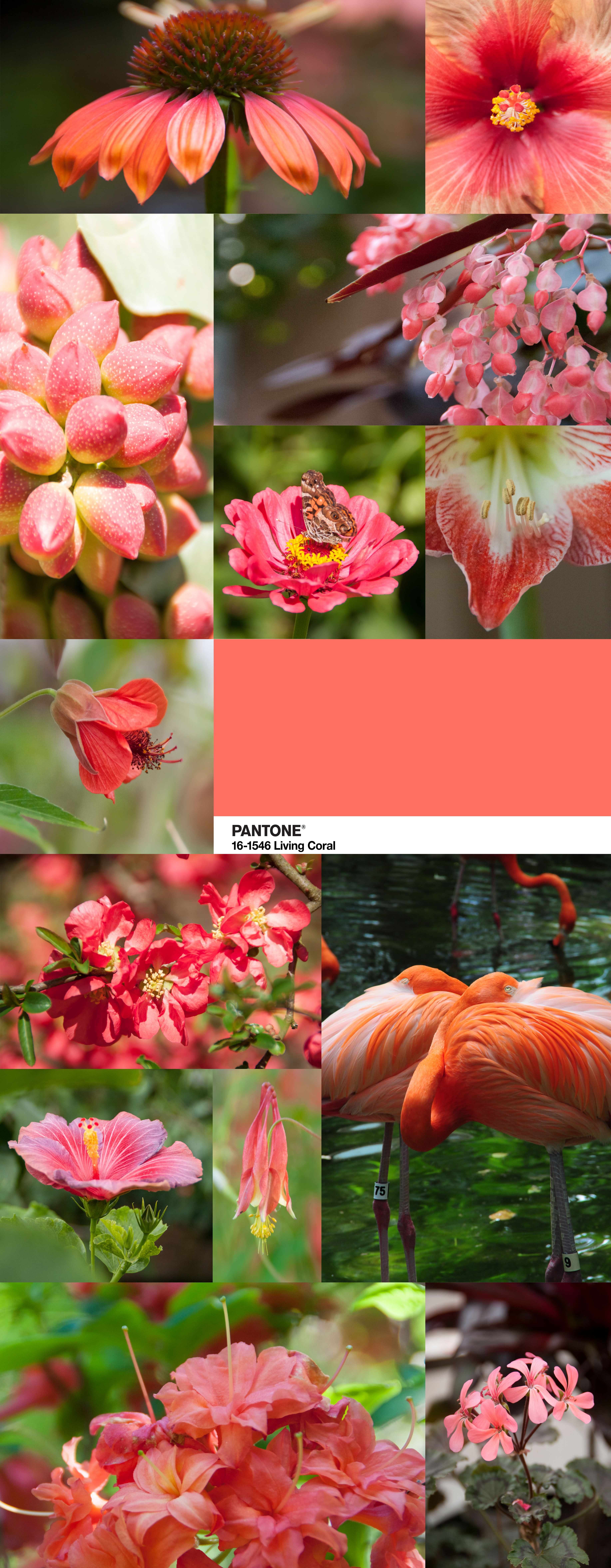 This beautiful, summery, warm color of the year - Living Coral - is a wonderful selection for 2019! Use #TheArtofEcology to share how you found Living Coral in nature!